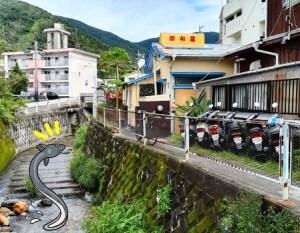 奄美・昭和荘横の小川のオオウナギ