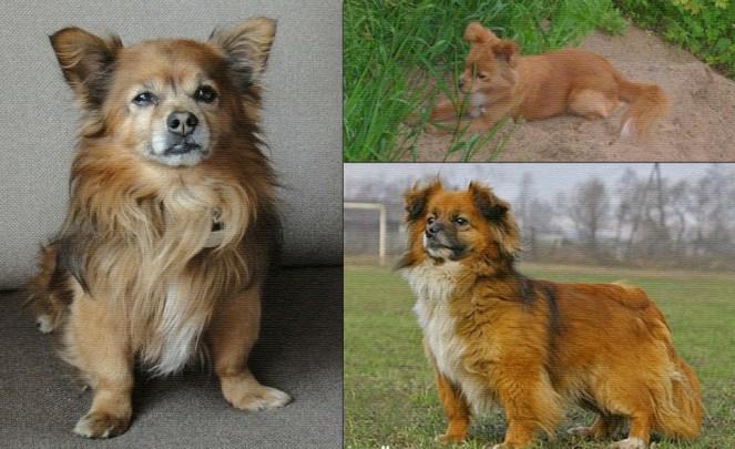 породы собак маленьких размеров с фотографиями и названиями