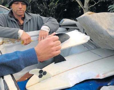 Surfer survives shark attack | News