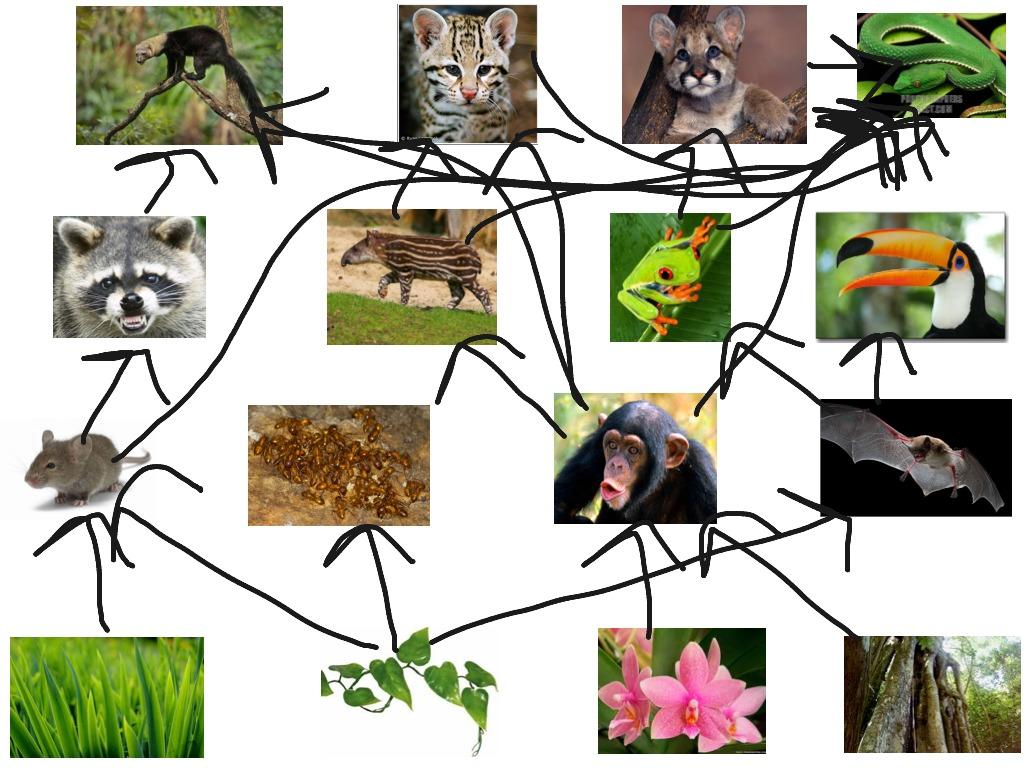 Eboneeporcha S Tropical Rainforest Food Web