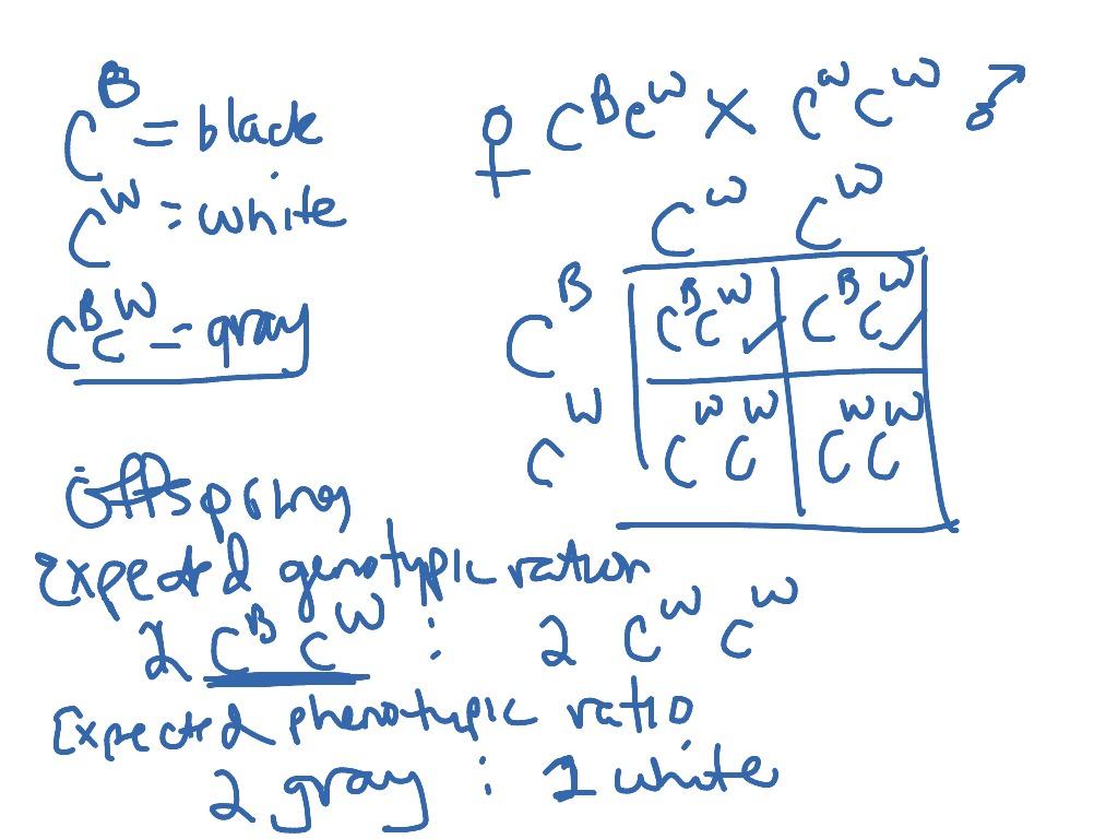 Genetics 3 Incomplete Dominance Practice Problem