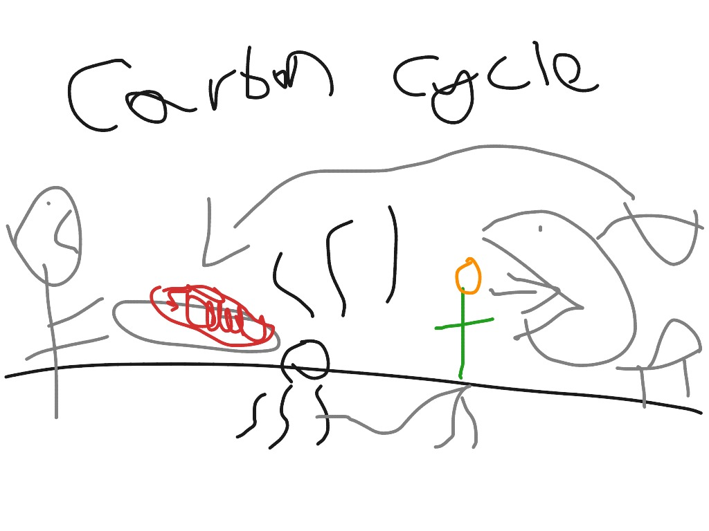 Carbon Cycle By A S