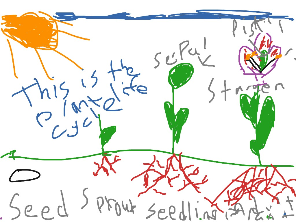Plant Life Cycle With Isaac O And Eli L