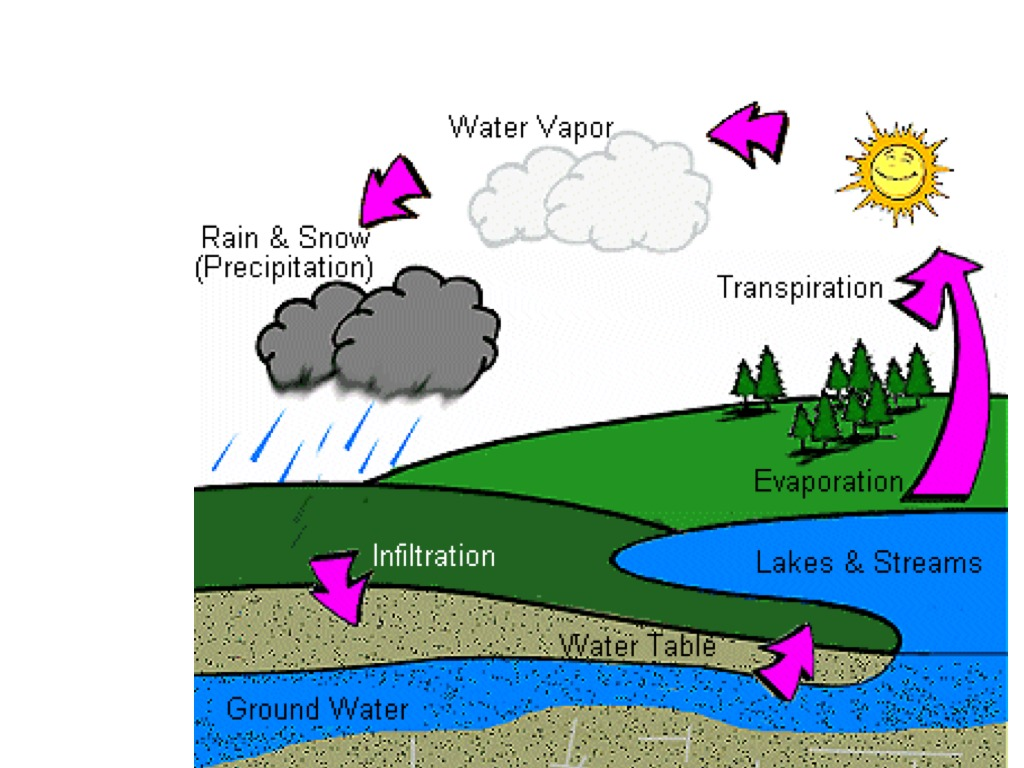 Worksheet The Water Cycle Worksheet Answers Worksheet