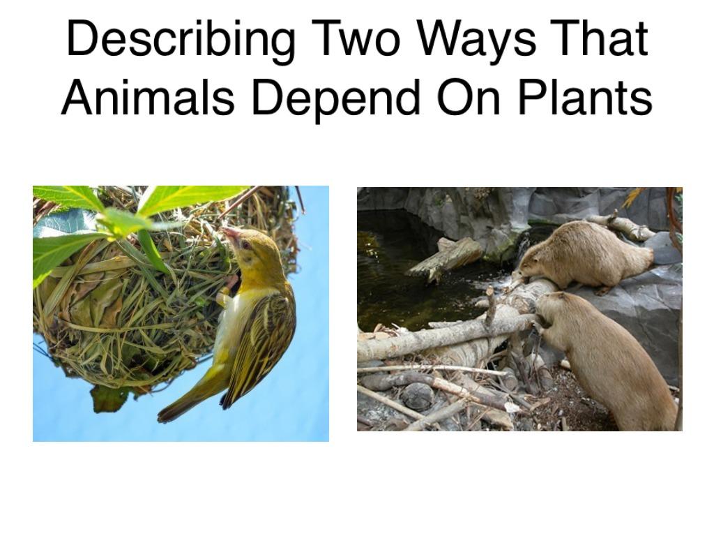 Moderate Severe Spec Ed Describing Two Ways Animals