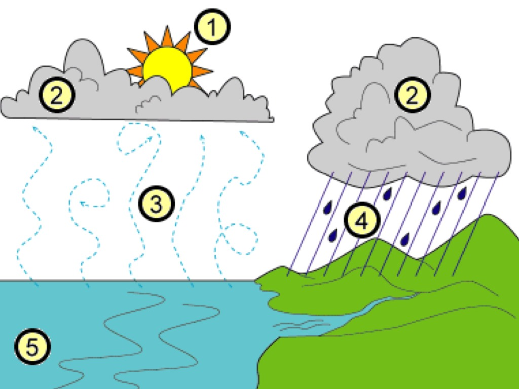 Simple Water Cycle Diagram To Label