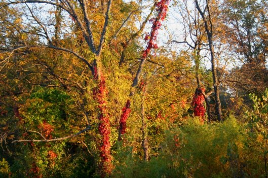 Fall in west central Missouri -  F 5.6, 1/40, ISO 100, 55 mm.
