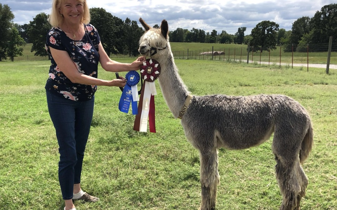 Oklahoma's Most Adorable Award-winning Alpacas