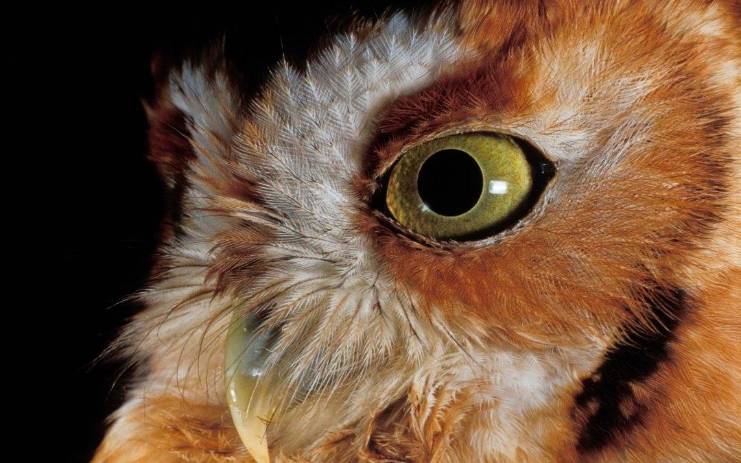 A Naturalist Voice  The Winter Secrets of Nightfall