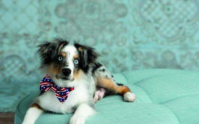 13th Annual Cutest Pet Contest