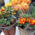 Things to do on Maui: Upcountry Farmers Market