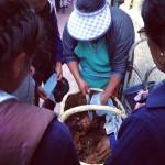 Comida Tipica in Cusco: Cuy Chactado