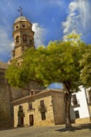 Which is most beautiful...Tree or tower? Baezas' Cathedral.