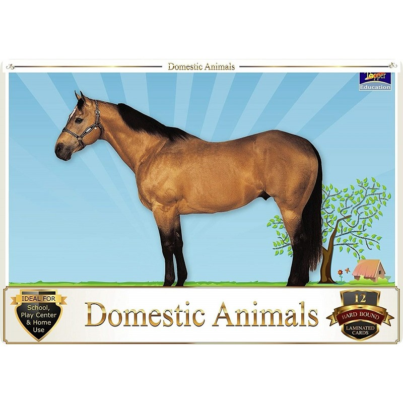 Flash Card Domestic Animals Pack Of 12 Cards 31x22 5cms