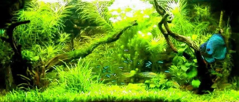 Freshwater Plants for Shrimp tank