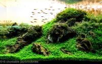 Top 5 akvárií