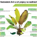 Najčastejšie problémy rastlín v akváriu