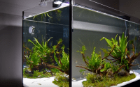 ako vytvoriť akvárium