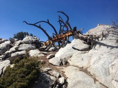 Mt. San Jacinto, 2