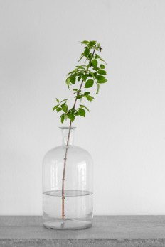 green-plant-in-glass-vase