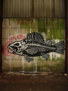 roa skeletal fish