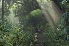 Niyamgiri Hill