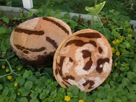 Insides of two mushroom bowls