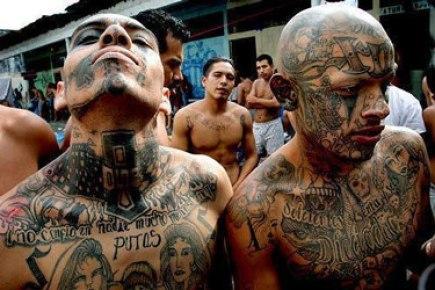 immigrant-gangs