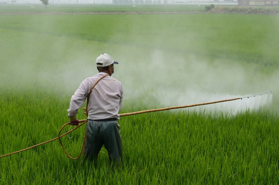 Pesticide Residues In Indian Food