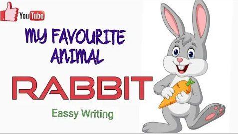 10 line essay for My favourite pet animal Rabbit