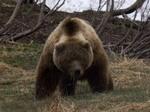 a medvék lefogynak, amikor hibernálnak)