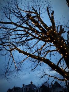 licht in bomen