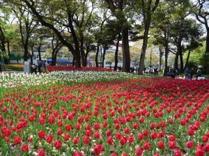 横浜公園子供楽しく過ごす最適な