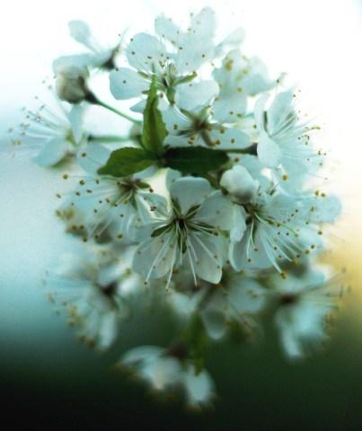 wild flower 4-2