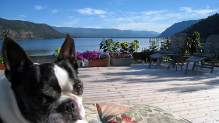 Shuswap Vacation Rentals View of Little Shuswap Lake from deck