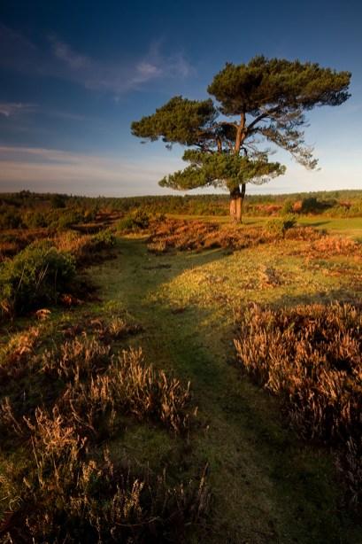 Bratley Tree US