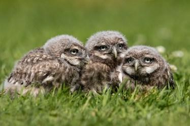 Little Owls-2563