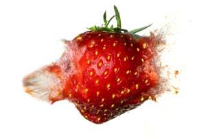 Strawberry-08916