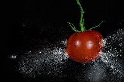 Tomato_3836