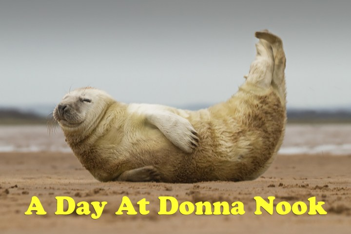 Photographing Seals At Donna Nook