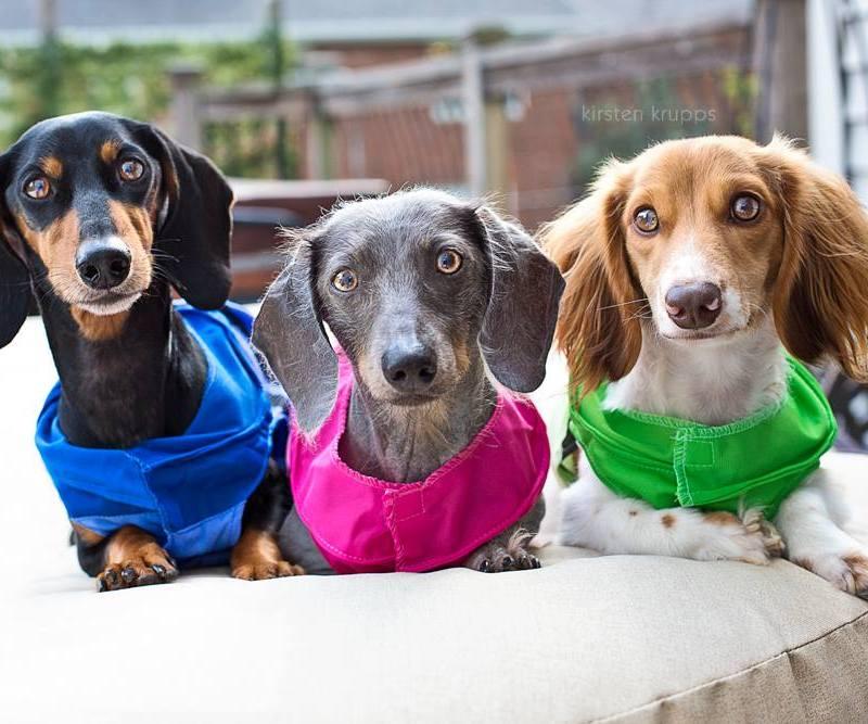 Meet My Pups