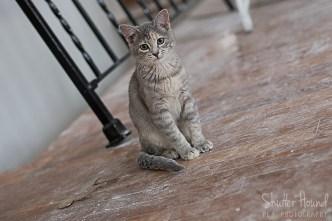 Scout the Kitten