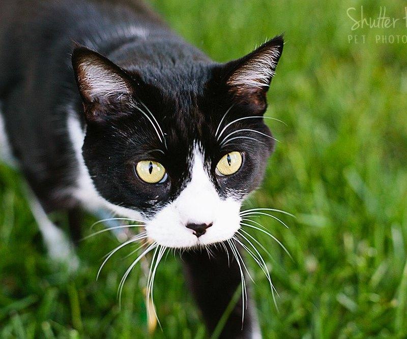 Mulligan | Pet Session
