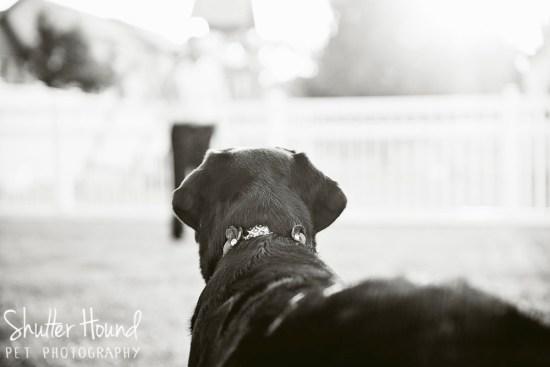 Gloria_ShutterHoundPet_Photography039