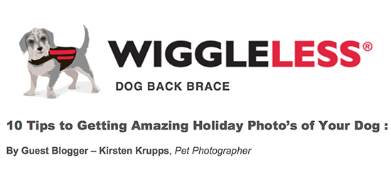 WiggleLess Guest Blog : 10 Tips to Getting Amazing Holiday Photo's of Your Dog