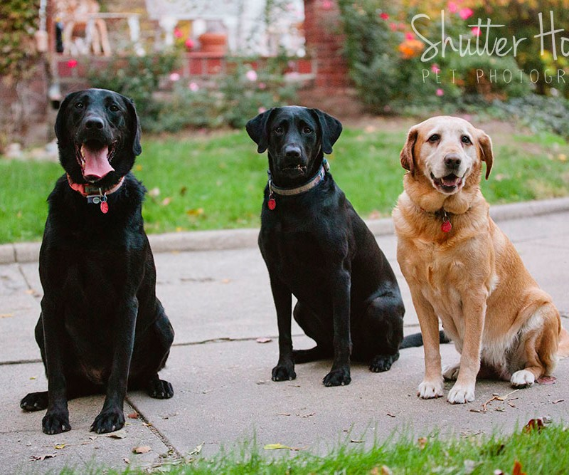 Rosie, Daisy, + Skeeter | Signature Session