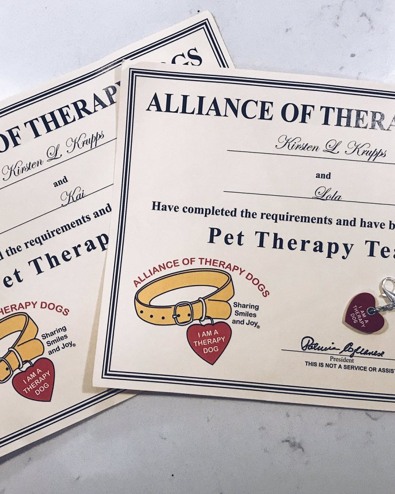 I'm a Therapy Dog Team, Again!