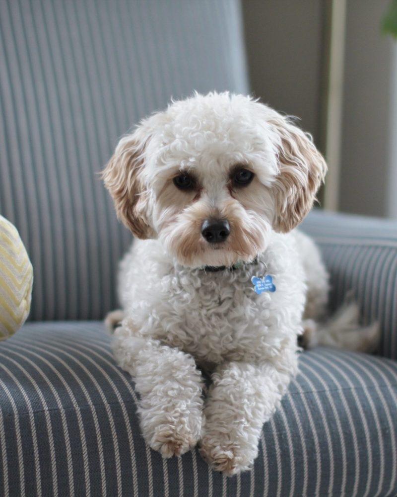 3 Essential Budget-Friendly Techniques for Keeping a Clean, Dog-Friendly Home