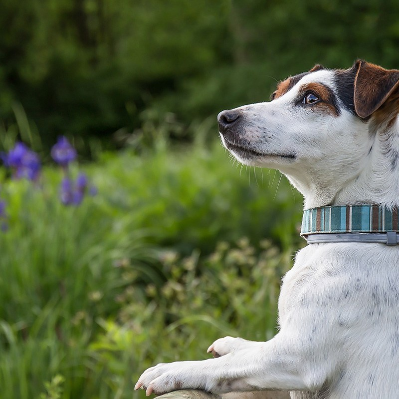 Daily Walks: The Best Gift You Can Give Your Dog