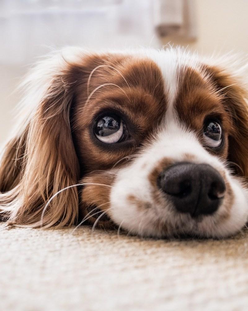 Correcting Common Canine Behavioral Problems